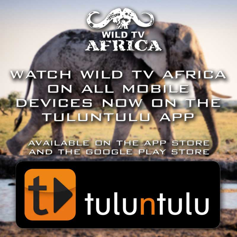 wild-tv-website-popup-download-tuluntulu